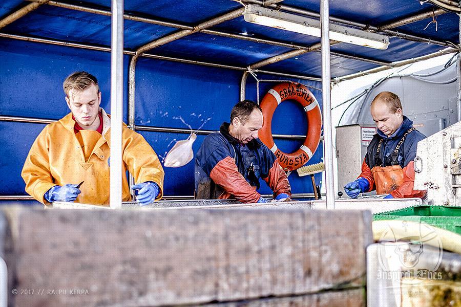 """Auf Fangfahrt vor Fehmarn mit Mike Hilger und seiner Crew auf der SB4 """"ANDREA"""""""