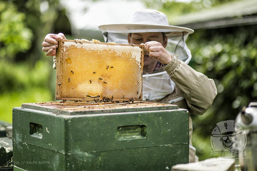 Die Honigmanufaktur Flügelchen von Agnes Flügel, eine Reportage für MeerART (www.fluegelchen-honig.de)