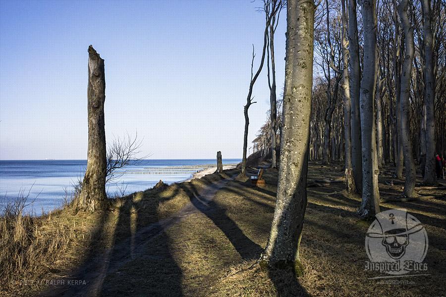 Impressionen vom idyllischen Strand und den Geisterwald in Nienhagen // Foto: Ralph Kerpa