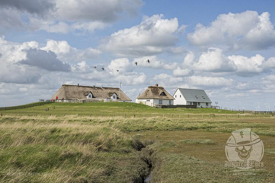 Impressionen von der Hamburger Hallig in Nordfriesland // Foto: MeerART