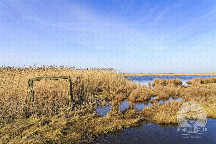 Salzsee im Naturschutzgebiet bei Westermarkelsdorf auf der Ostseeinsel Fehmarn // Foto: Ralph Kerpa
